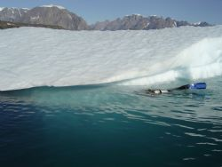 Iceberg Diving in Scorsbysound East Coast of Greenland by Ryan Stafford 